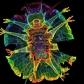 tardigrade (1)