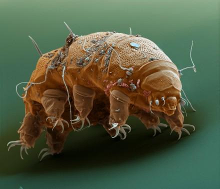 tardigrade 3